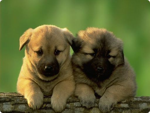 Cute Puppies , Cute Dogs , Look Puppies natural Foto