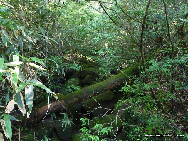 Photo of  JP - Parc Nacional Kirishima-Yaku, Kirishima-Yaku National Park (霧島屋久国立公園)