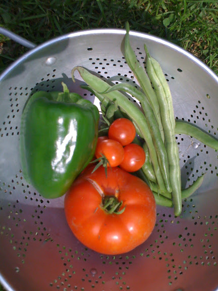 Home grown tomatoes, pepper, and green beans
