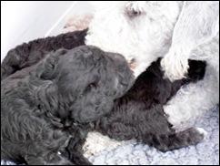 Pups_May_2010_029