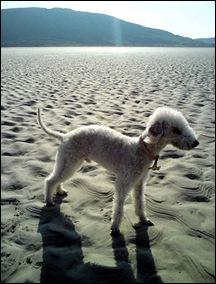 Bodger_beach