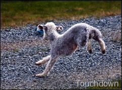 touchdown_lge