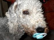 dummy dog 004