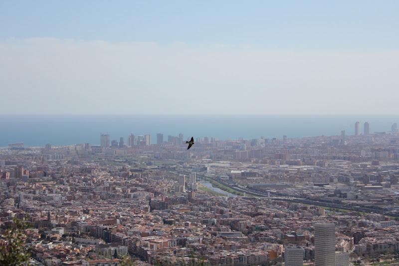Vol d'oreneta sobre Barcelona