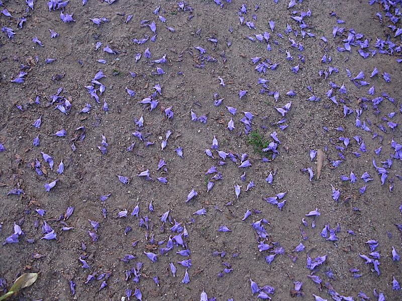 Flors florint-se