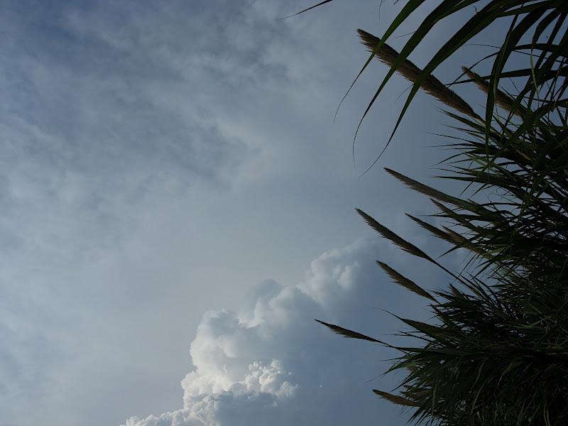 Perfil de vegetació sobre el cel