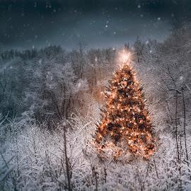 Peace by Karen Raymond Burke - Public Holidays Christmas ( snow fall, photoblend, christmas, glow, holiday, lights, canon 6d, winter, tree, blue, ice, snow, night, gold )