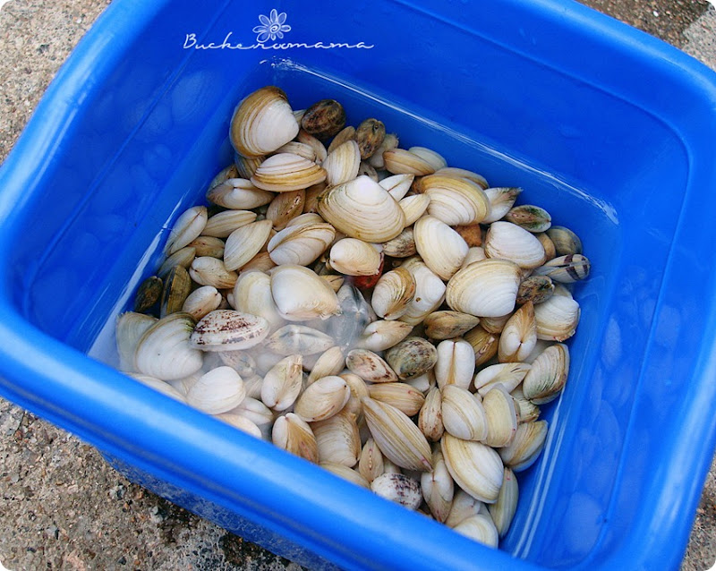 Clams-in-blue-bucket