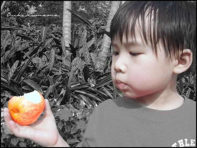 josh-apple