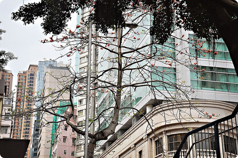Trees-and-buildings