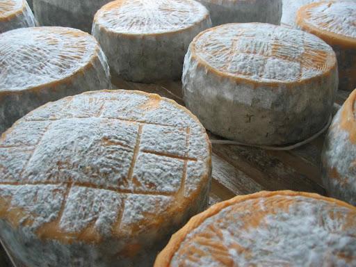 http://lh3.ggpht.com/_YJWbOrG-e-E/S0pxGl9ultI/AAAAAAAABDA/baMEKCzbi0k/Cheese%20Aging,%20Molise%202.jpg