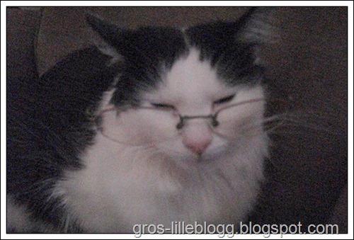 brille-gille