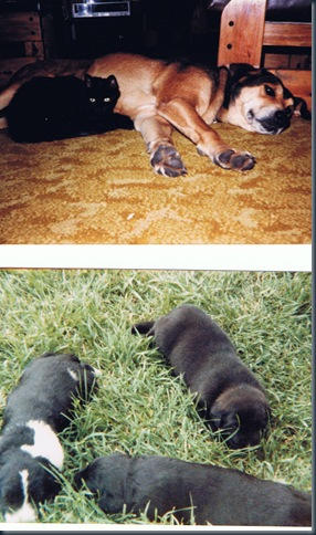 Bear and puppies