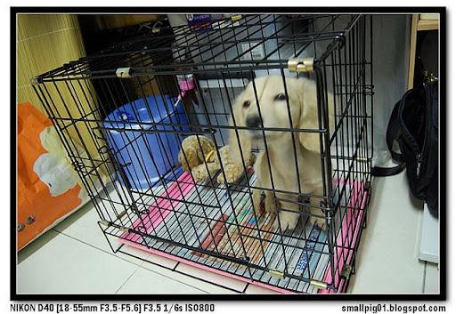 [DOG] MIMI的寵物用品