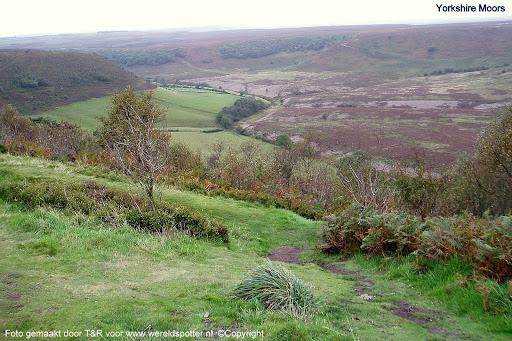 Yorkshire Moors 04.jpg