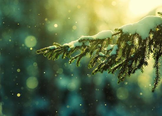 專題圖輯#17–雪Snow