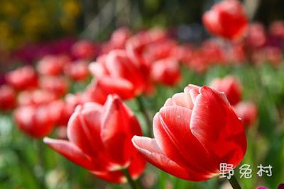[台南-旅遊] 南元農場-2011行春版