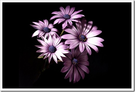 asters-386851