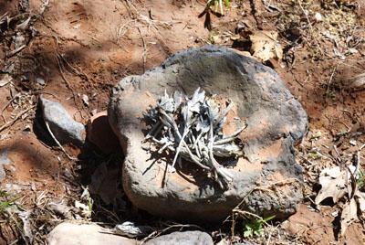 DSC_0038 white sage barely burned at oak creek en az.jpg