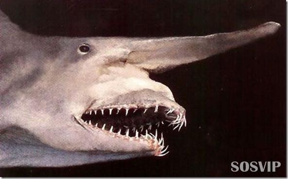 Animais estranhos criaturas awful-creatures.jpg (23)