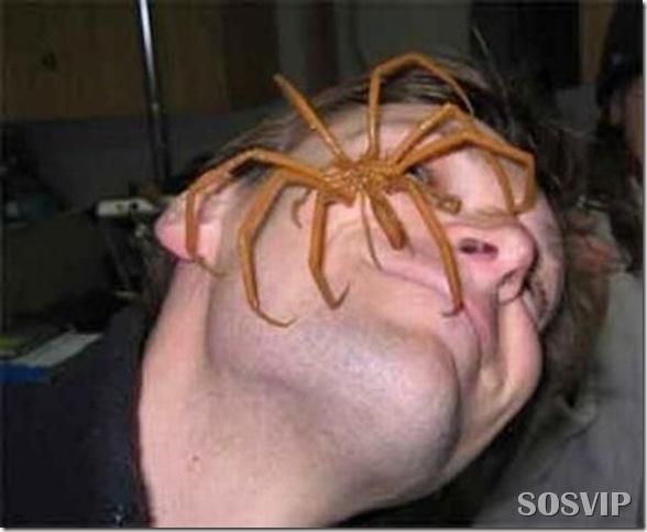 Animais estranhos criaturas awful-creatures.jpg (28)