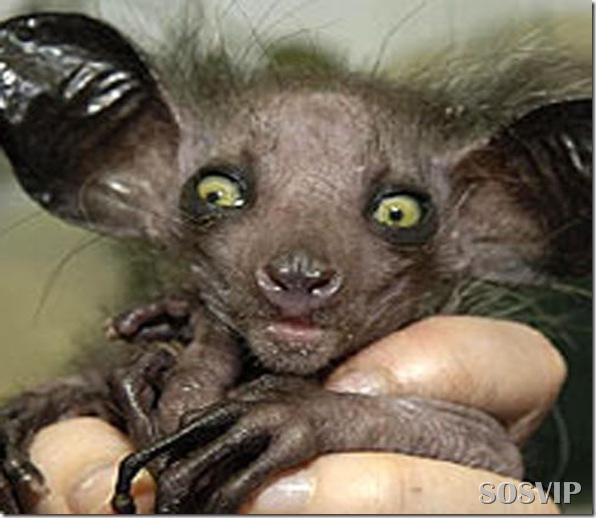 Animais estranhos criaturas awful-creatures.jpg (26)