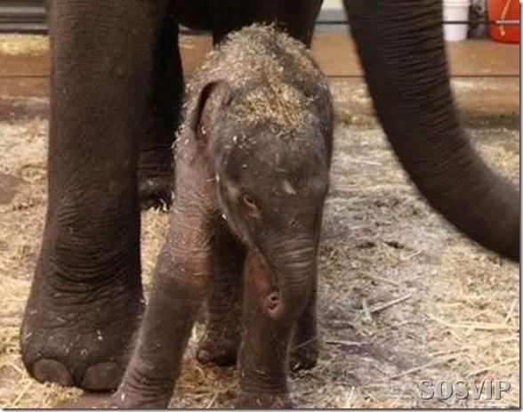 Animals baby - Bebes animais.jpg (2)