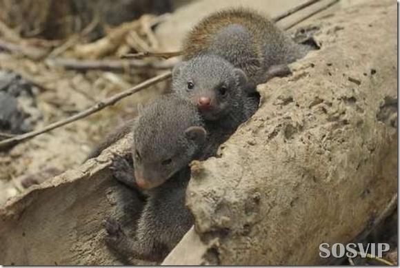 Animals baby - Bebes animais.jpg (4)