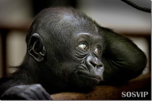 Animals baby - Bebes animais.jpg (21)