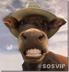 Jumento mula burro