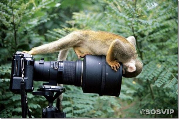 Imagens curiosas divertidas.jpg (14)