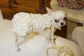На Неделе моды для питомцев в Нью-Йорке несмотря на экономию были представлены наряды и драгоценные камни для домашних питомцев за 1000 долларов. (REX FEATURES)