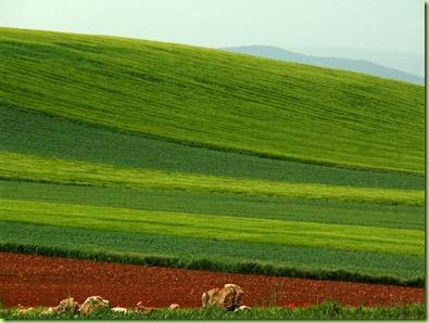 Campos de cereal en Torralba de Los Frailes