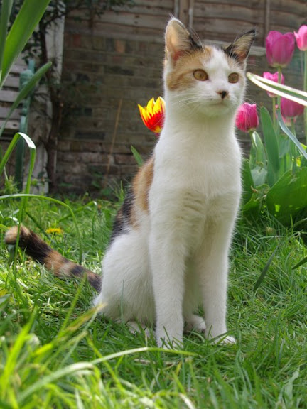 Photo of Florence the cat