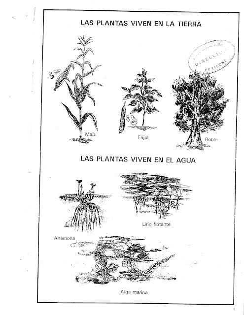 Fichas utilidades de las plantas - Fichas de plantas para ninos ...