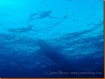 panama©JaimeSharp-7900