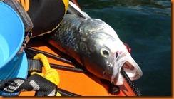 kayakdownundernzleg2-03642