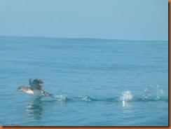 kayakdownundernzleg2-1020361