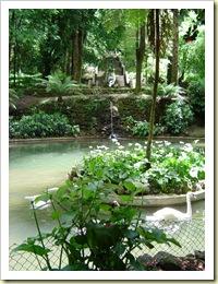 Busaco estanque_