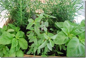 Herbs 029