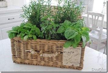 Herbs 144