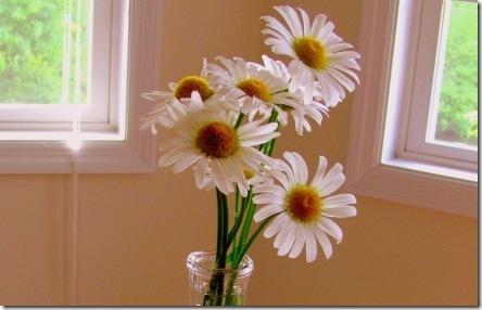 daisies inside