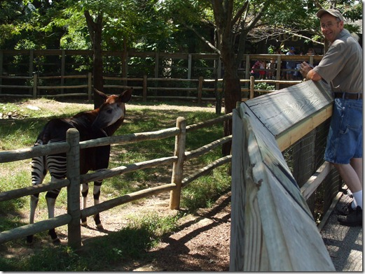 Zoo 011
