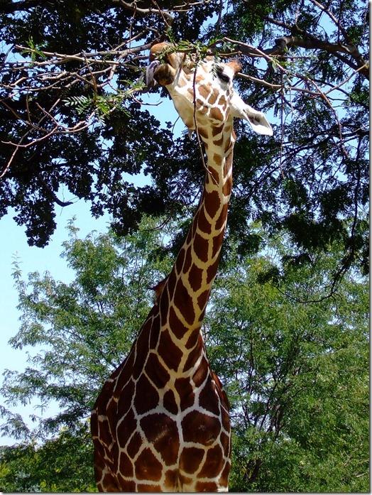 Zoo 060