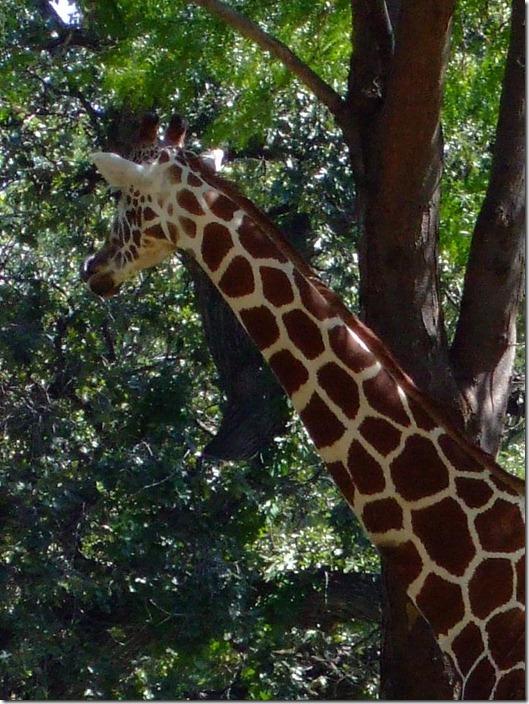 Zoo 049