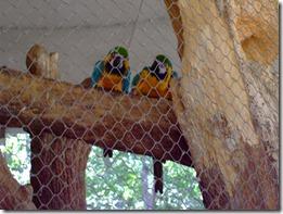 Zoo 118