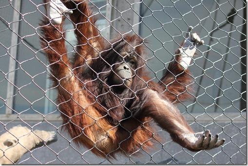 Zoo 649_thumb[1]