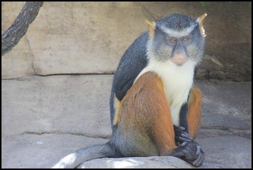 Zoo3-417_thumb