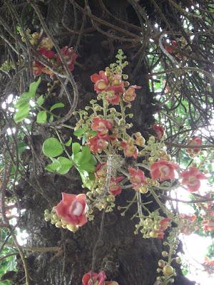Sala Tree