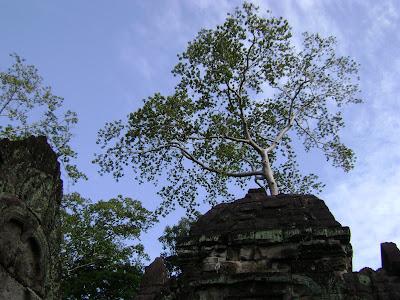 Tree at Preah Khan